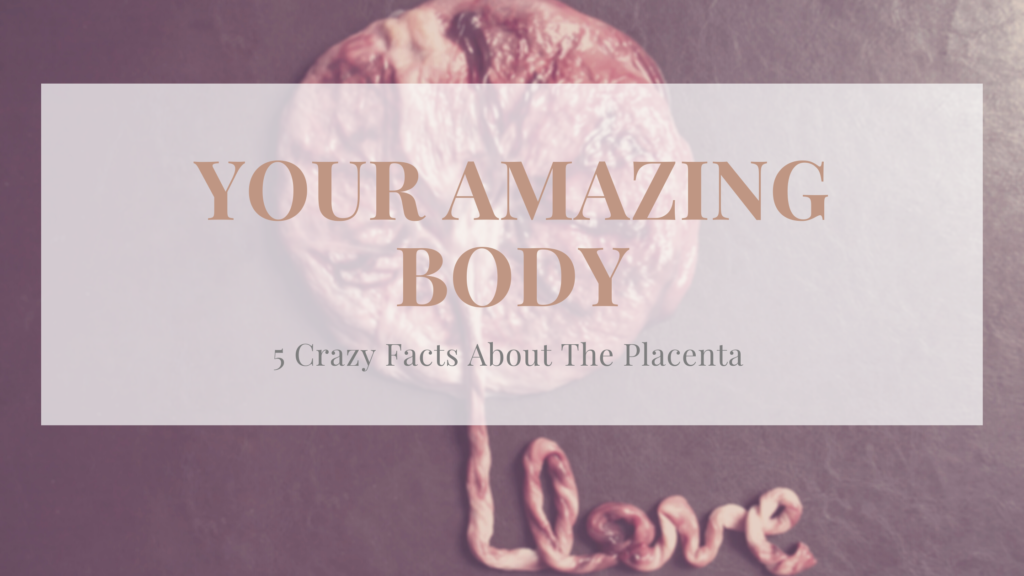 Facts About The Placenta
